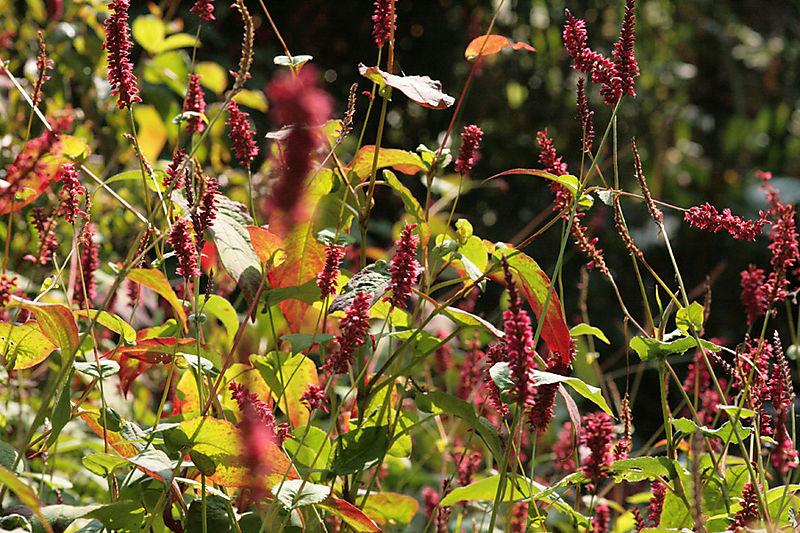 Redgrassesweb
