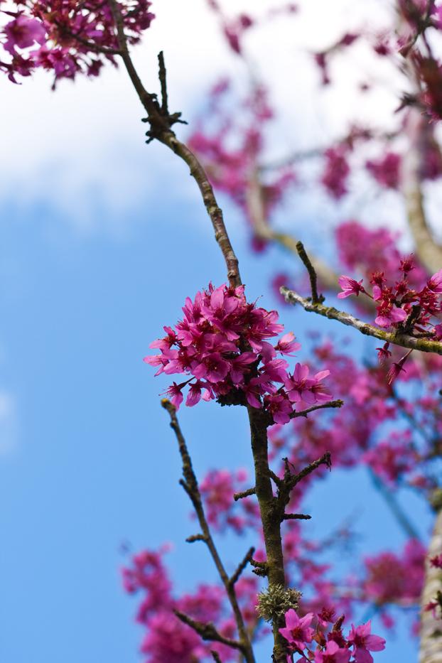 Blossomweb