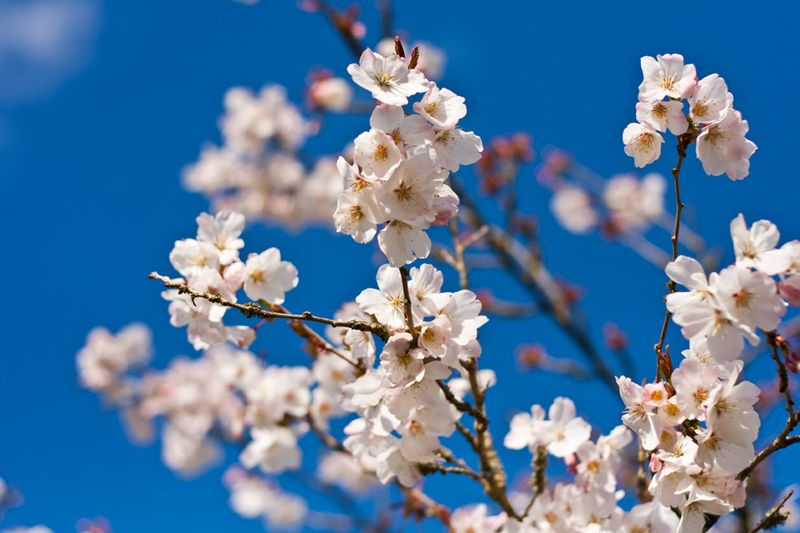 Blossom2web