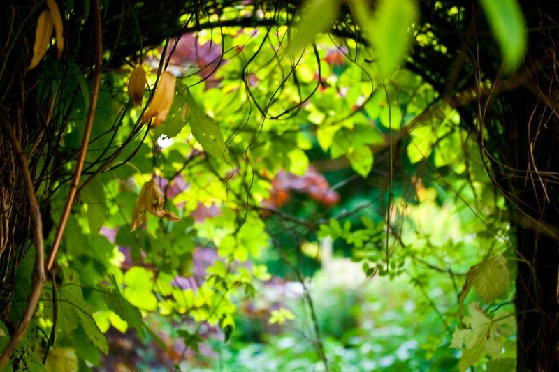 Gardenarchweb