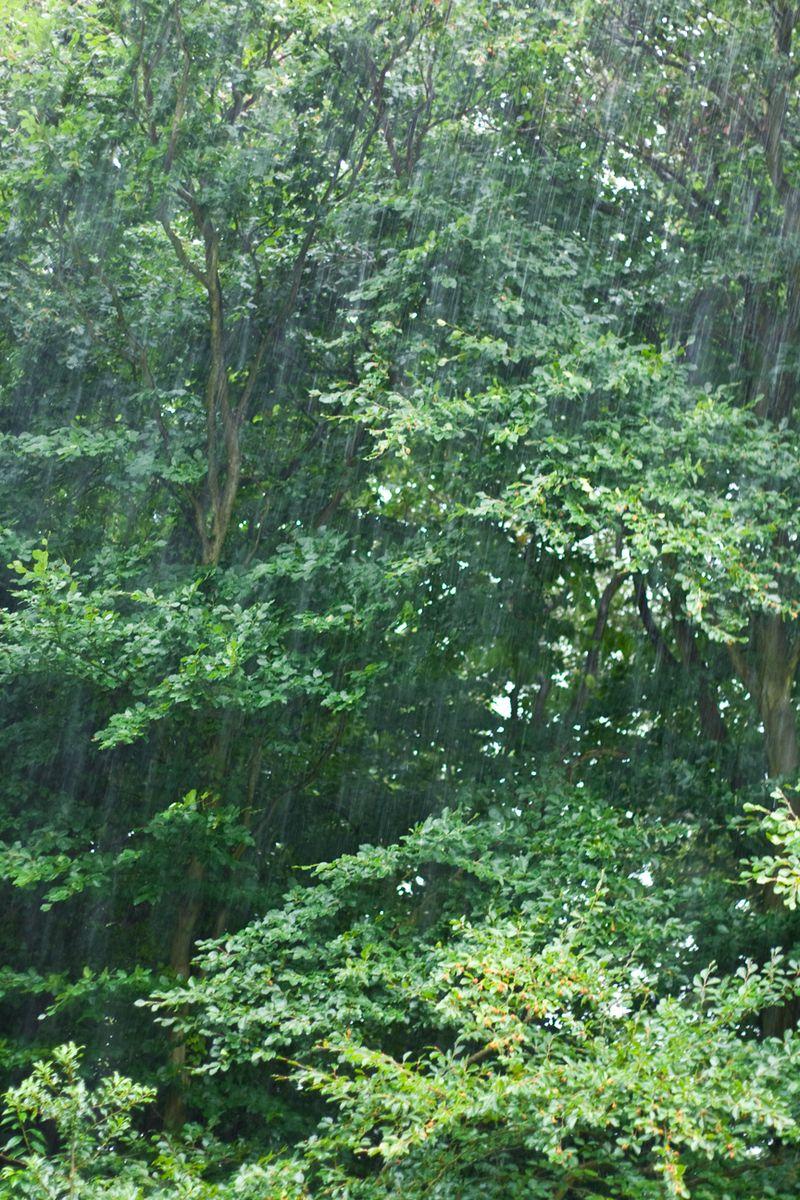 Rainweb
