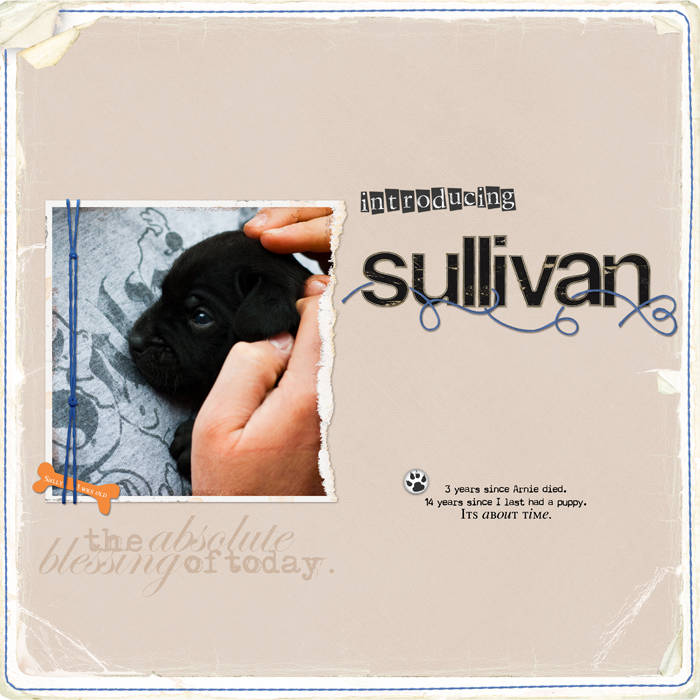 Introducingsullyweb