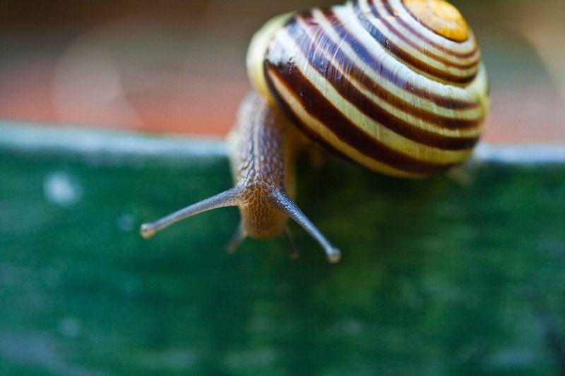Snailgreenpotweb
