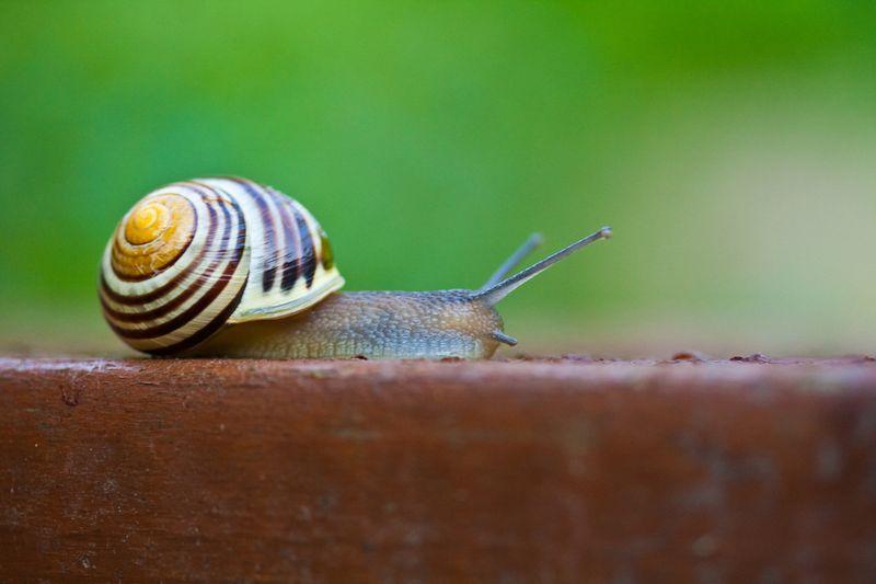 Snailweb