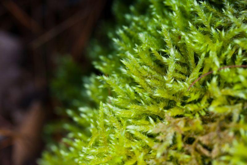 Mossweb
