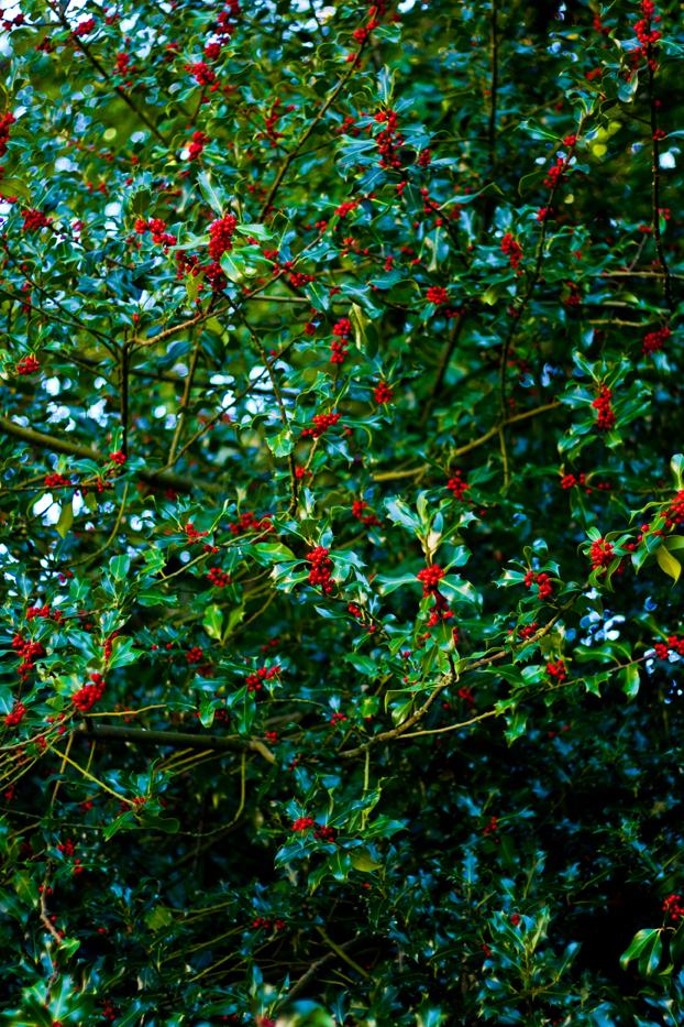 Berrygoodweb