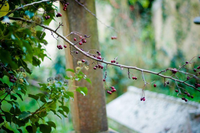 Branchofberriesweb
