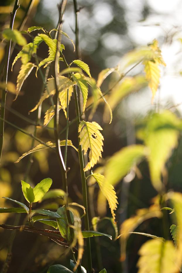 Gardenlight1web