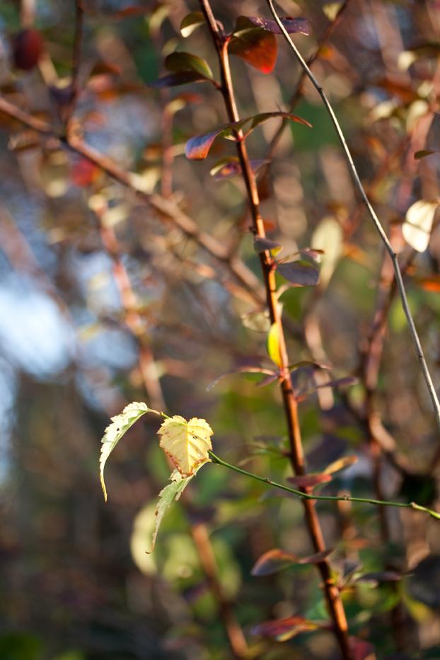 Gardenlight5web