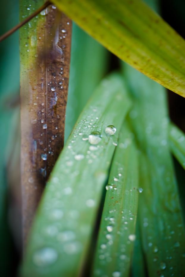 Gardenlight2web