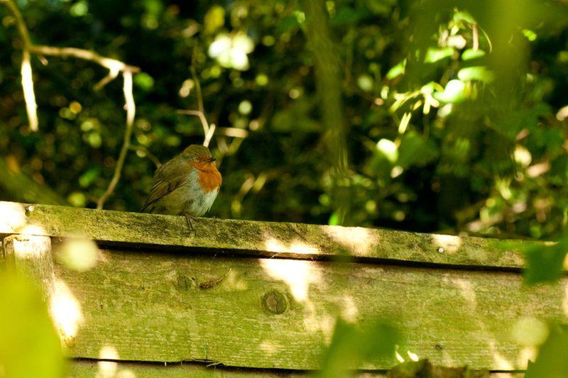 Robinsleepingweb