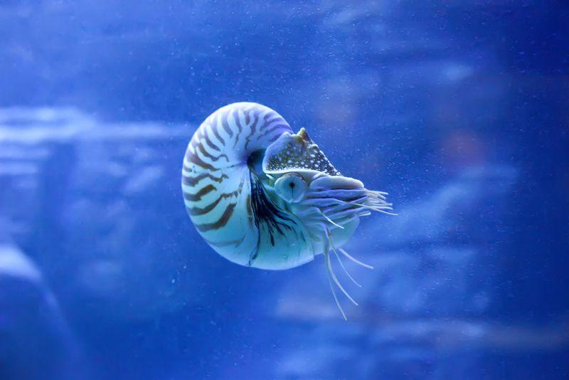 Shellfishweb