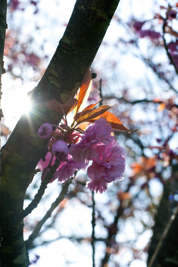 Blossomsunflareweb