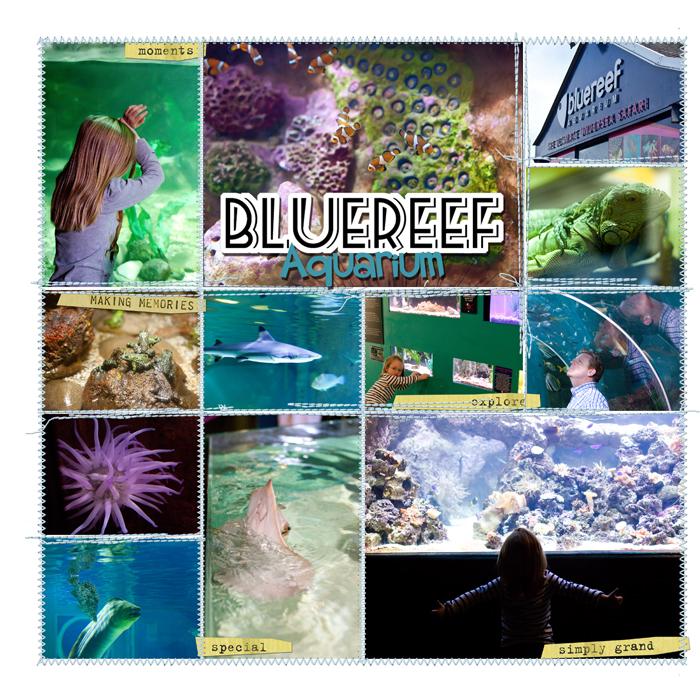 Bluereefleftweb