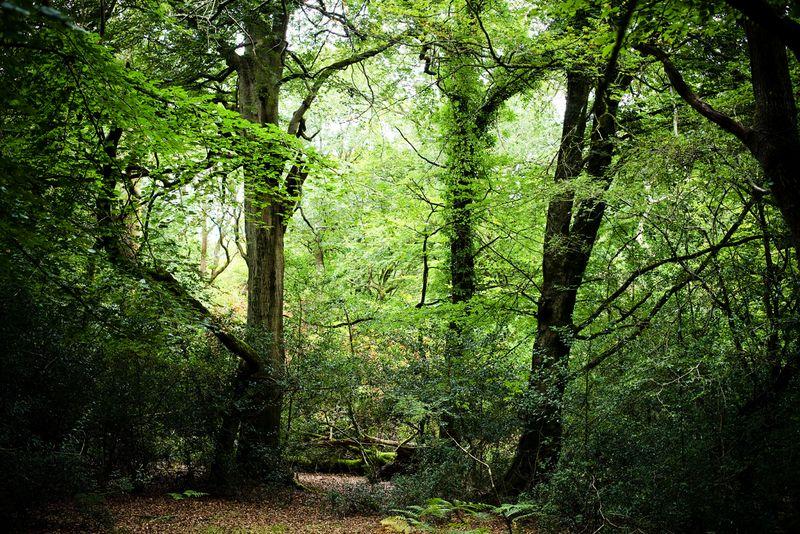 Forestweb