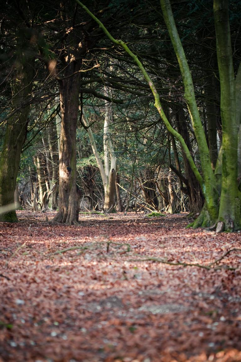 Woodland pathweb