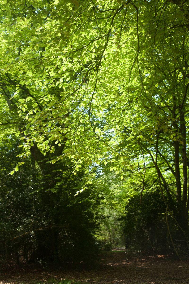 Bright greenweb
