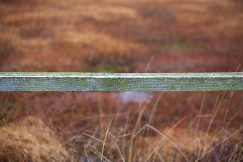 Railnewforestweb