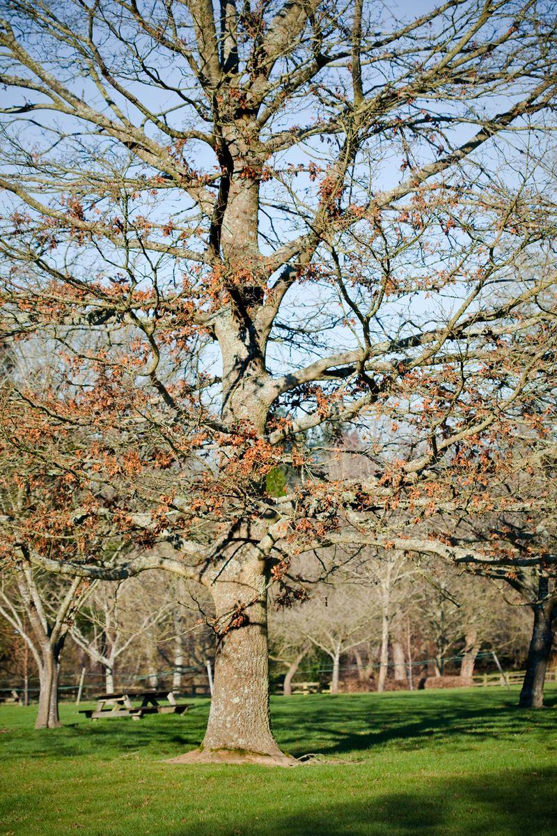 Treemendousweb