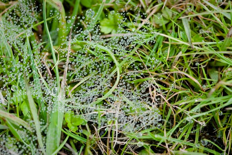 Dewdropsweb
