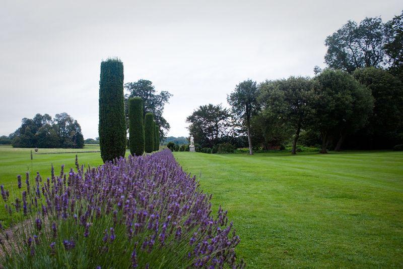 Lavender rowsweb