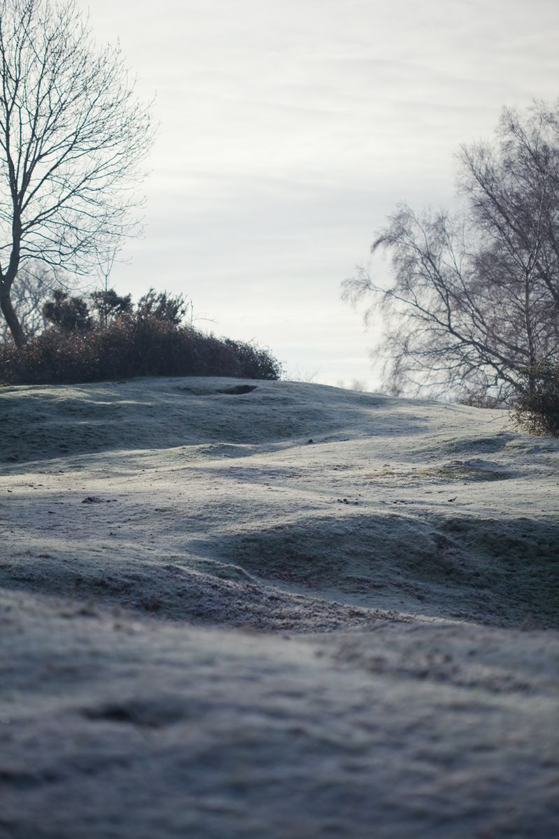 Frost on the hillweb