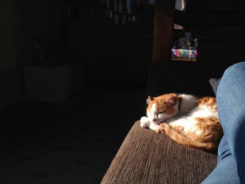 Sunnyspot