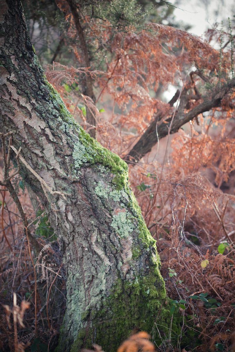 Foresthuesweb