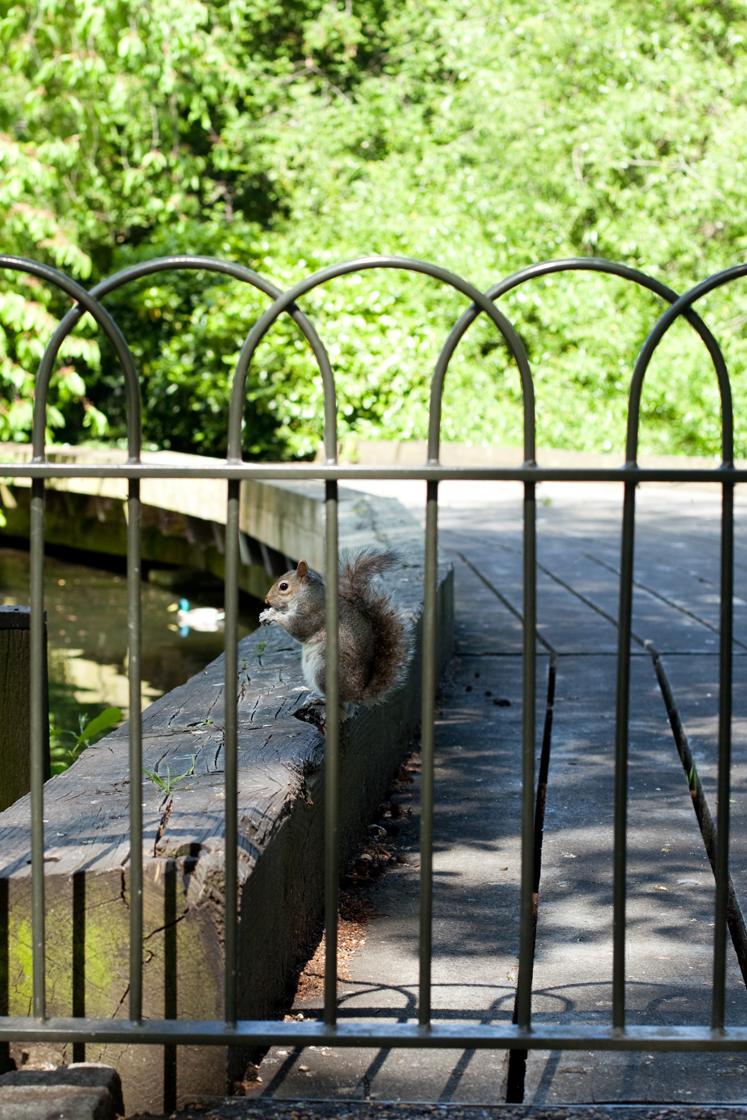 Squirrelgateweb