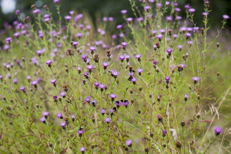Beeplantweb