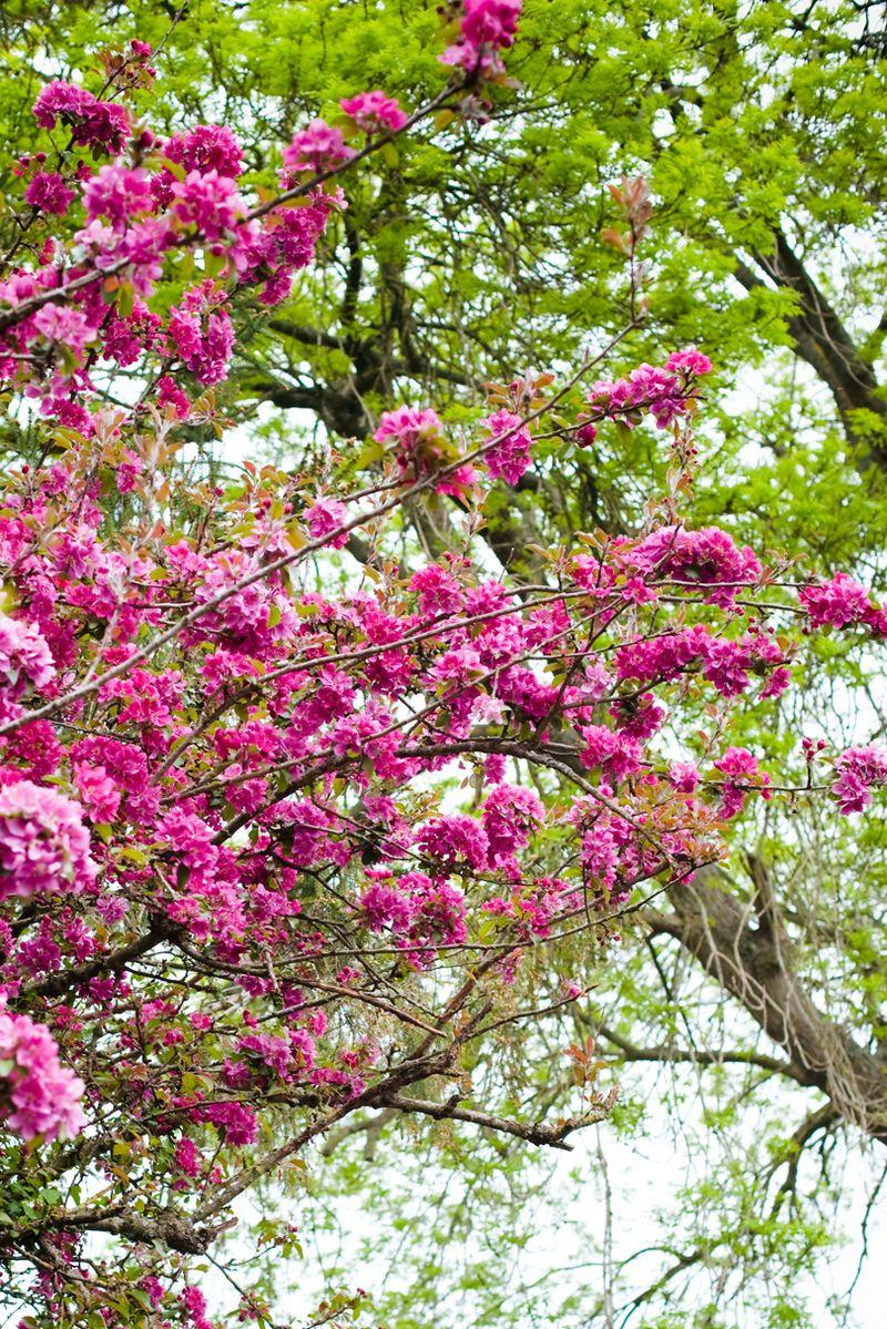 Very pinkblossomweb