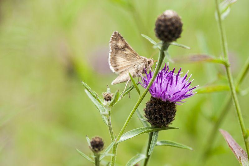 Mothweb