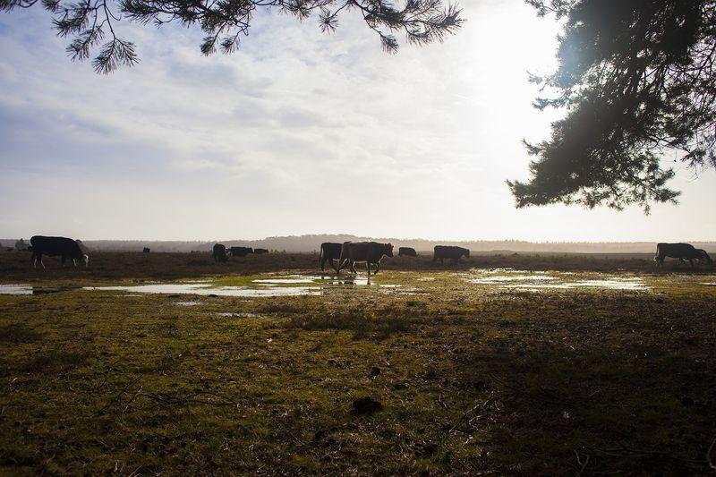 Cows2web