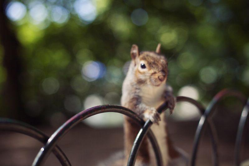 Squirrel5web