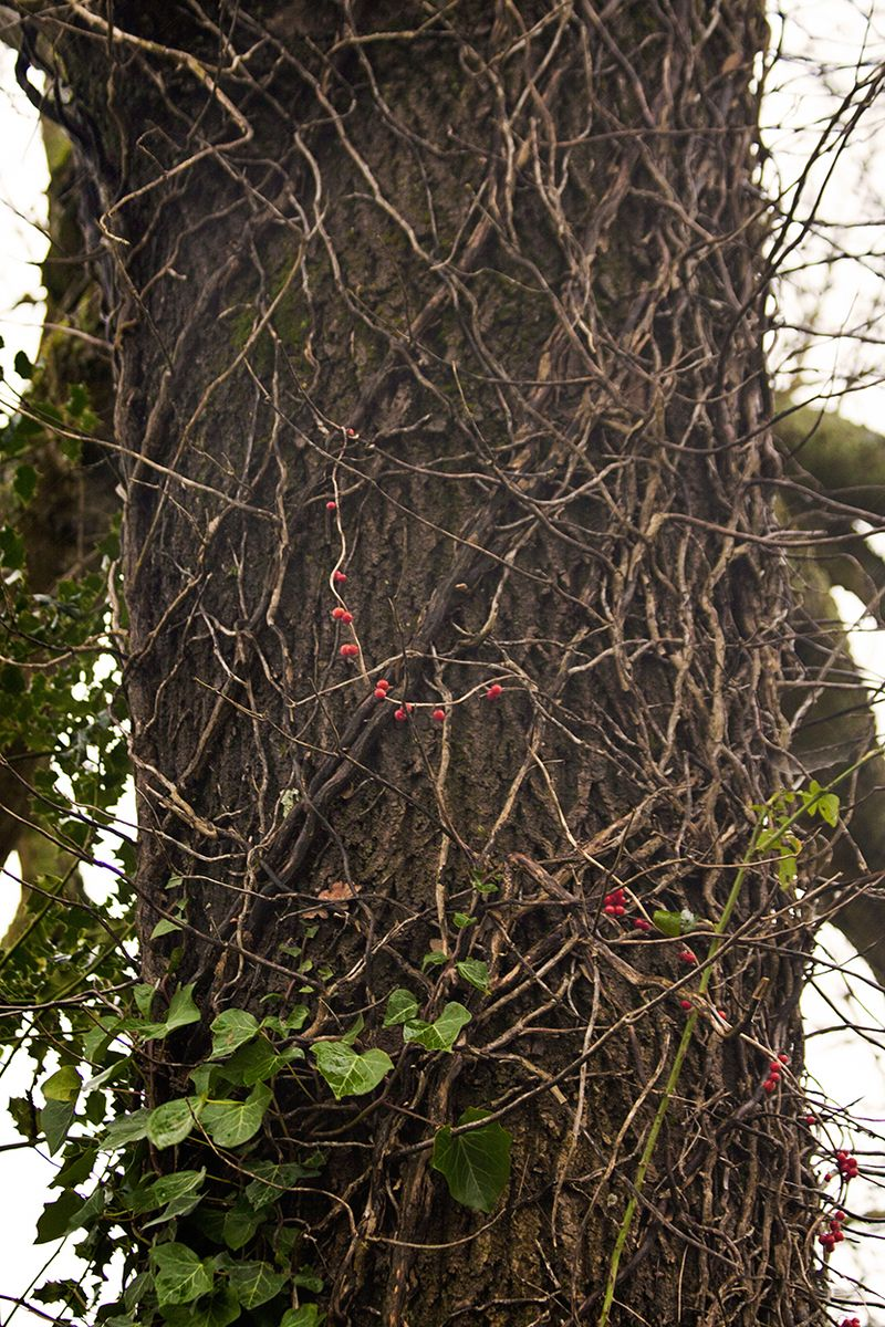 Redberriesweb