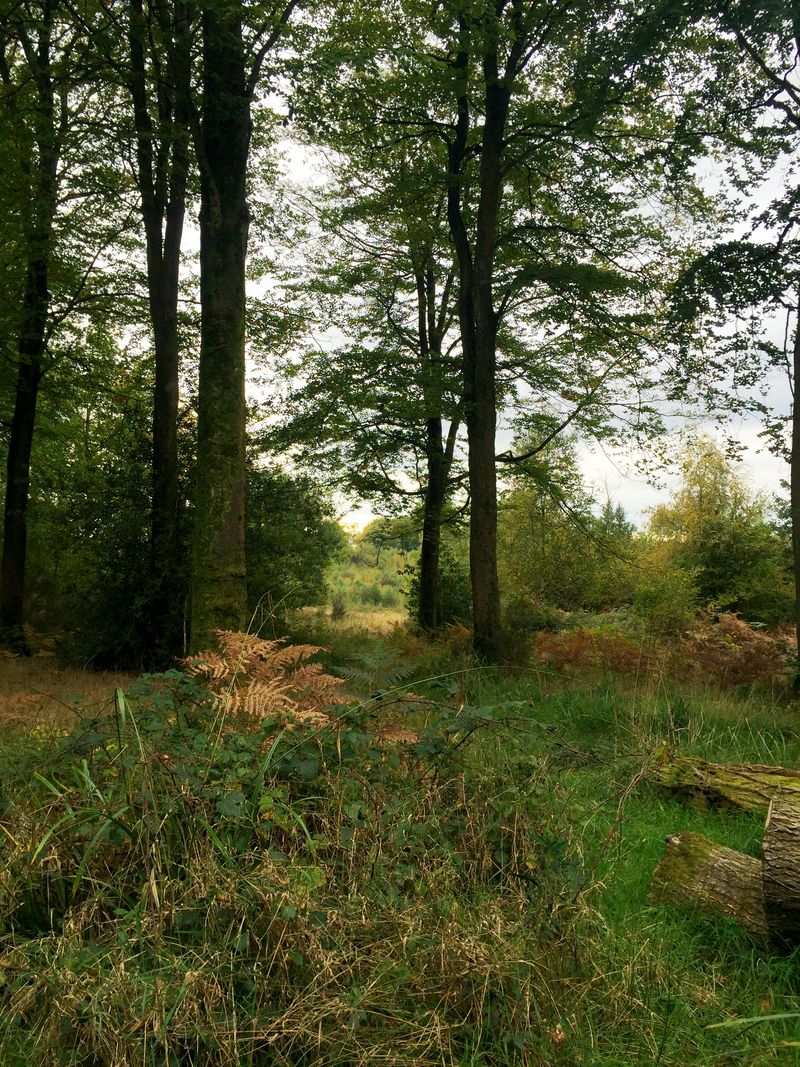 Ampfieldwoods