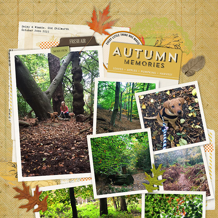 Autumn walkweb
