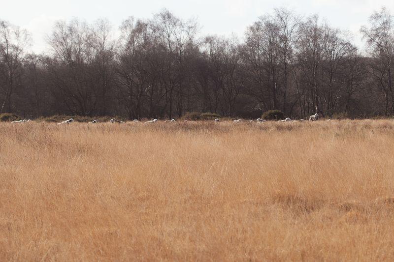 Sheeplineup