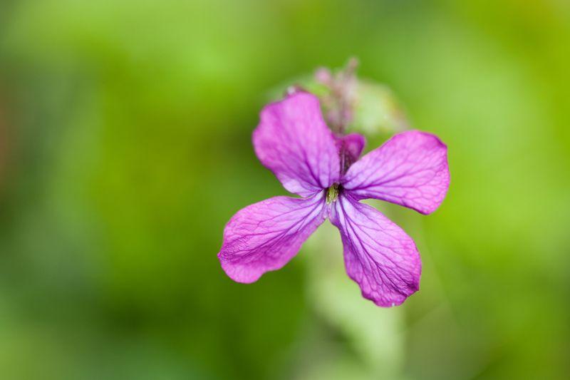 Tiny purple