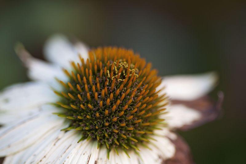 Flowermiddle