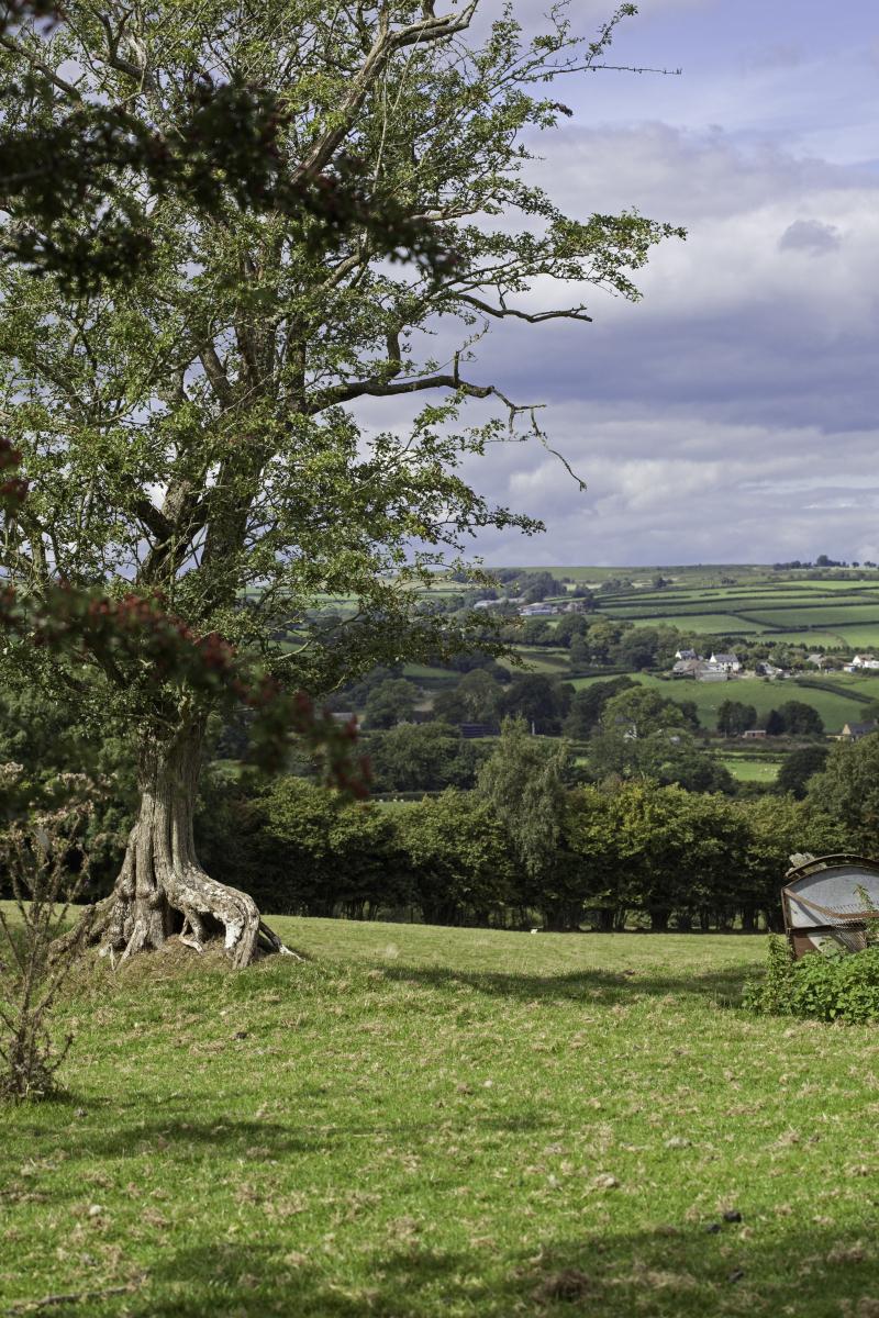 Treehillview