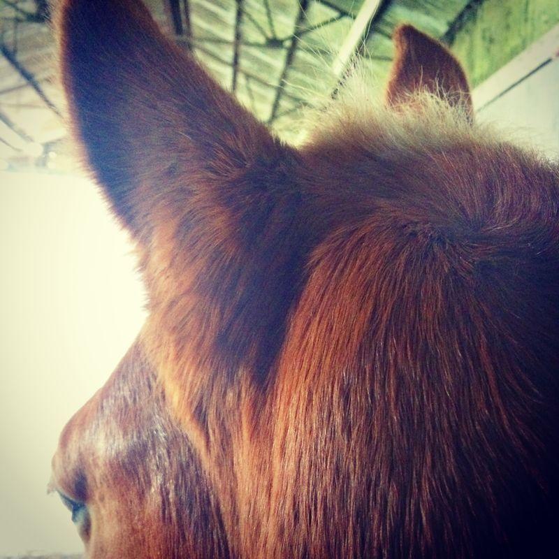 Ponyfluff