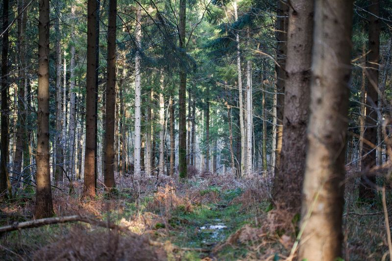 Forestwalkoffroad
