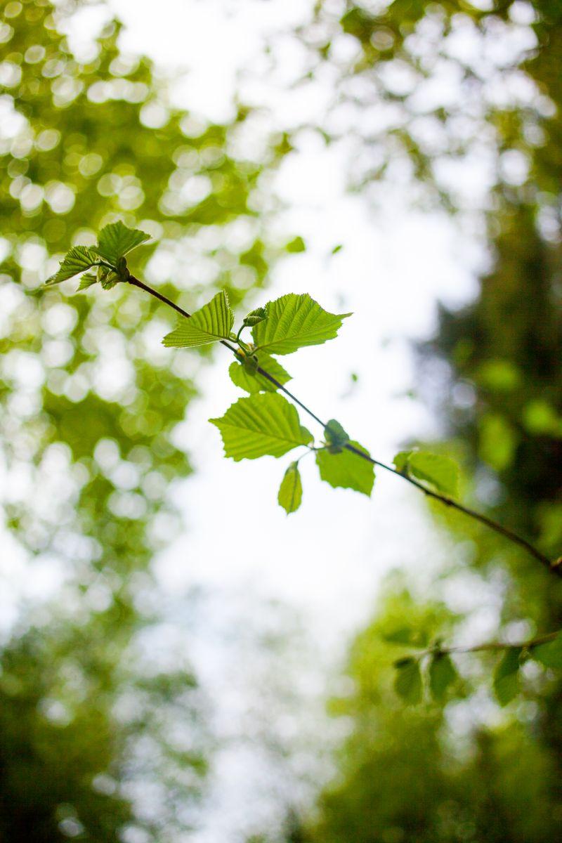 Leafbokeh