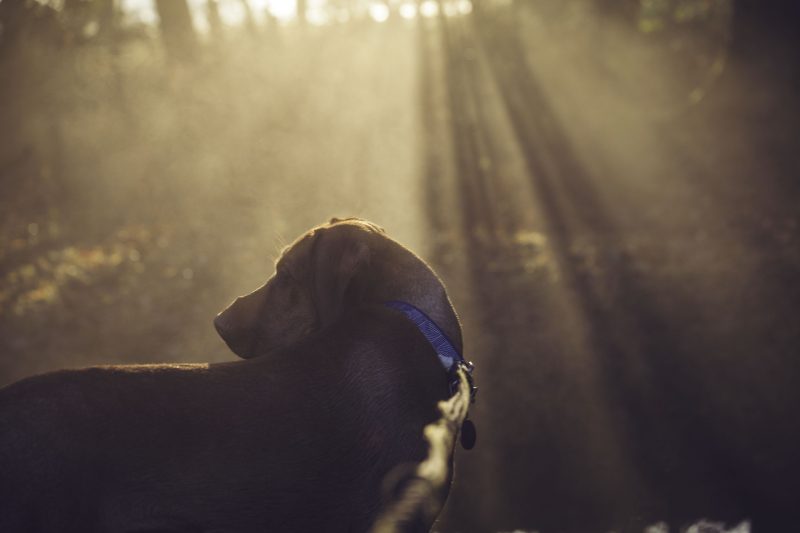 Wetdogsunshine
