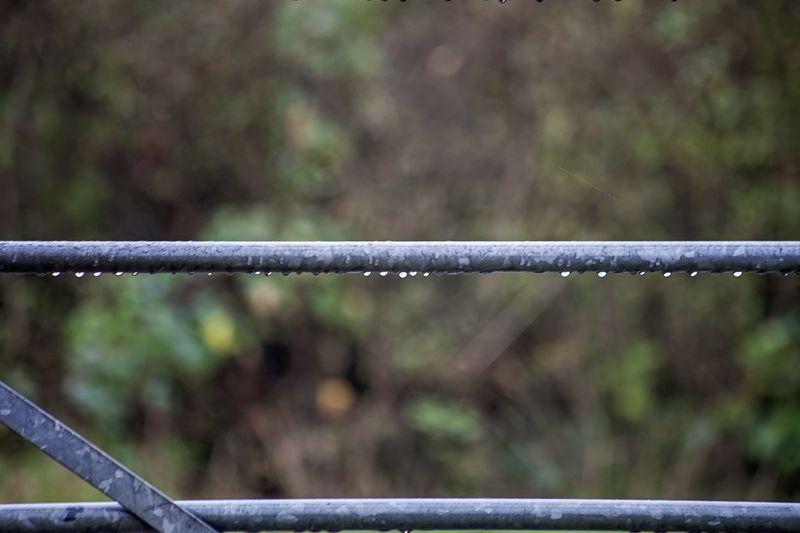 Rainygateweb