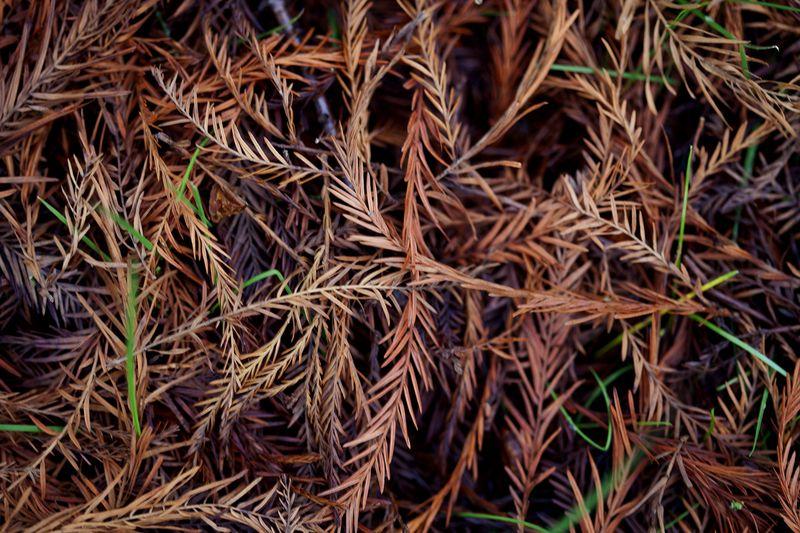 Forestfloorweb