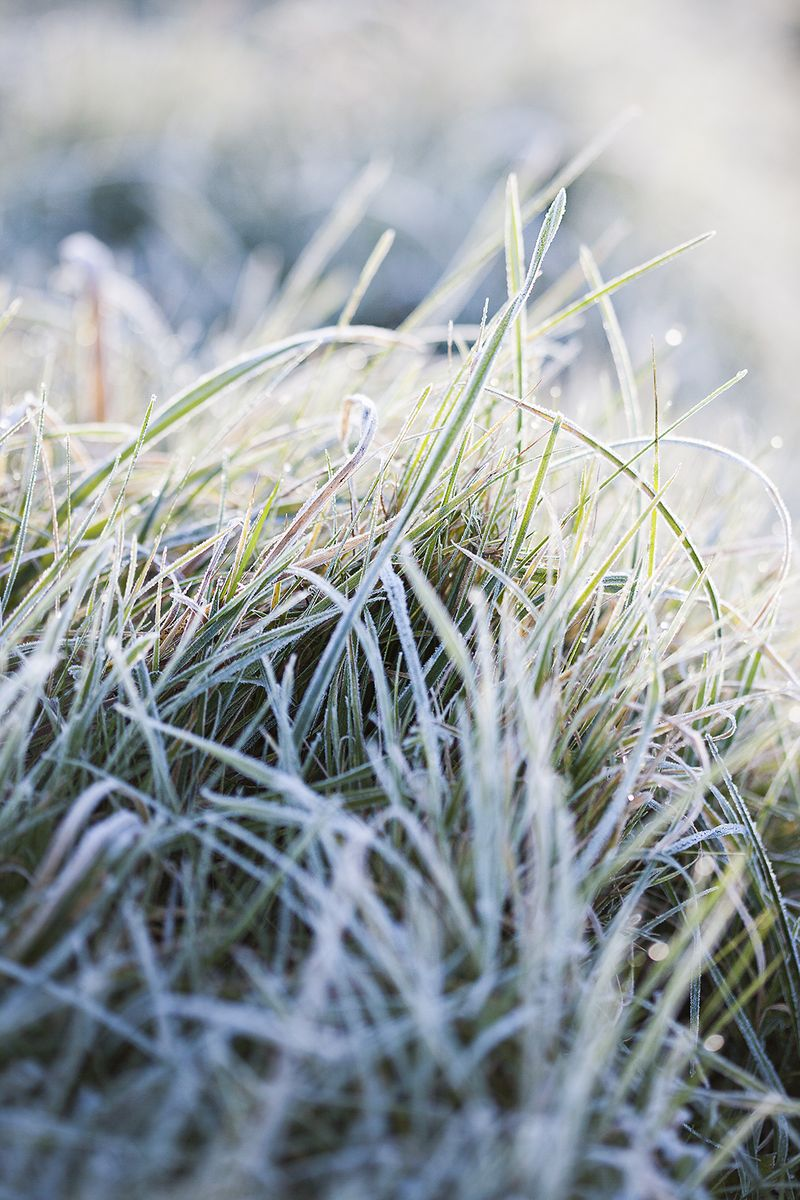 Frostygrassesweb