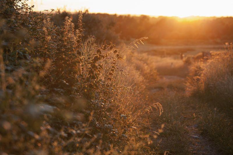 Goldenlightgoldenlightweb