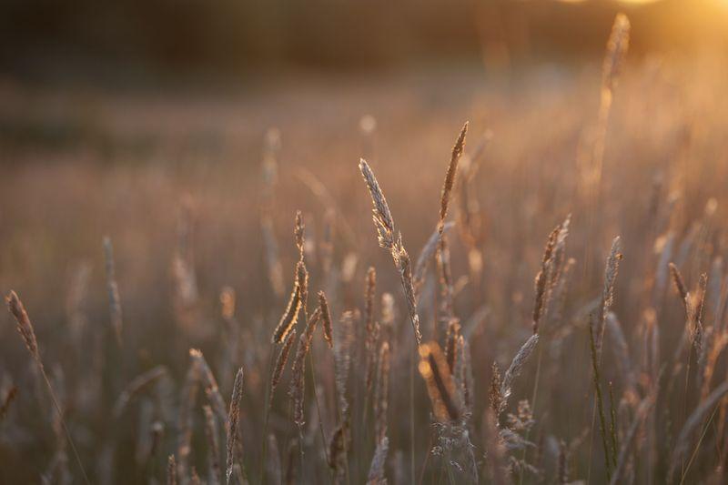 Grassseedsweb